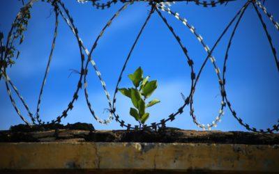 Befreie Dich aus Deinem Gefängnis